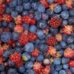 Pick Your Own Berries: A Summertime Tradition