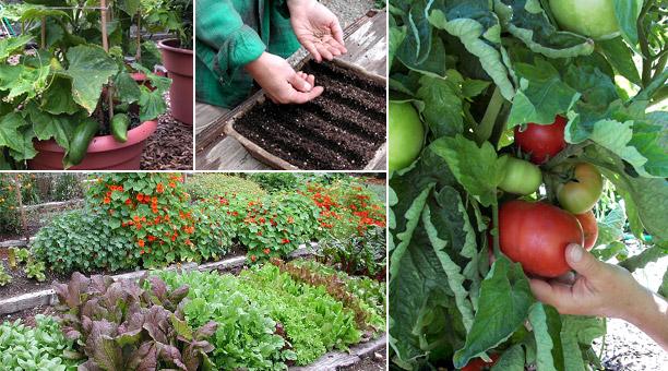 how to grow a spring garden