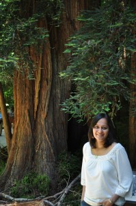 picture of Redwood tree