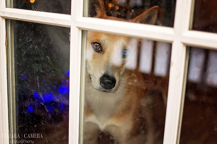 Remember that the rules of photography aren't set in stone. Sometimes a glare on the glass is the perfect way to the story you are writing with your picture - like this dog looking longing through the glass door waiting for his master to come home.