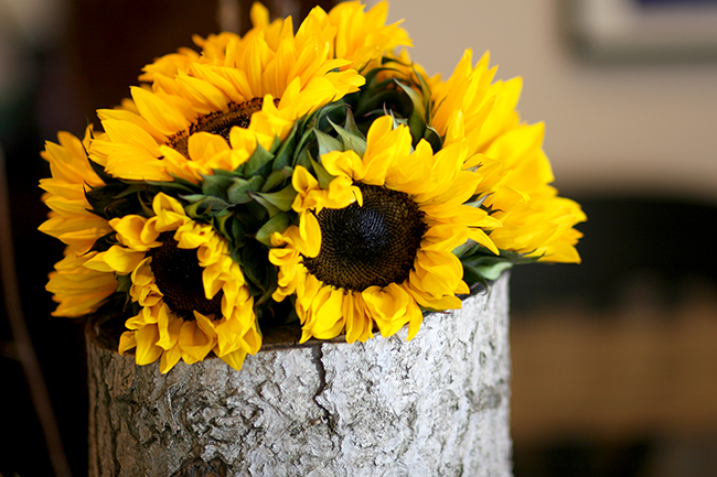 sunflowers on a log