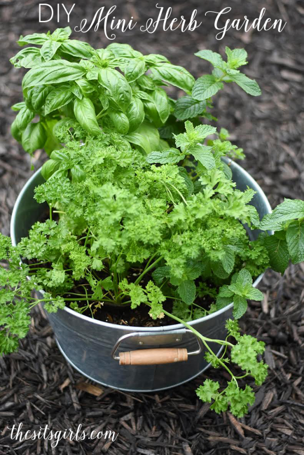 Want fresh herbs but don't have the space for a big garden? This DIY Mini Herb Garden is your answer! Great for people who live in apartments, or people who don't want the upkeep of a large garden.