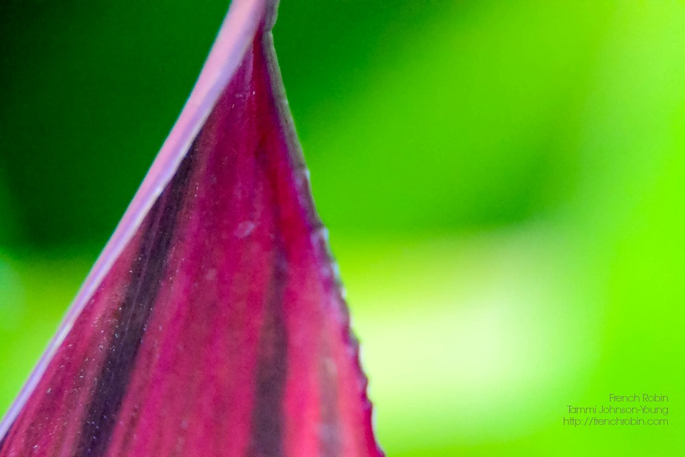 Red Leaf | Macro Photography