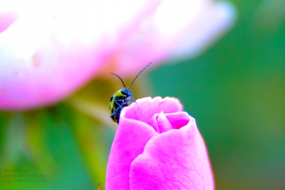 Insect on a pink flower | 5 Macro Photography Tips For Beginners