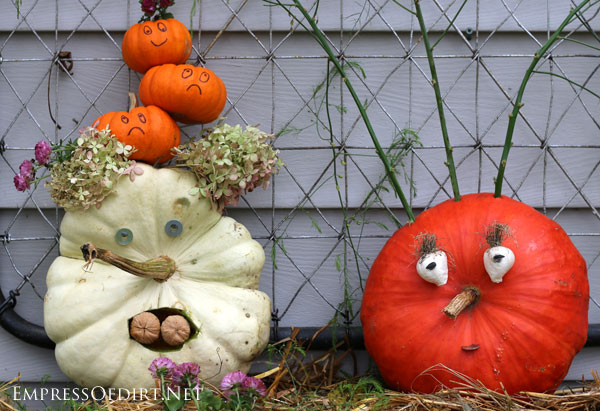 Create a whole family of pumpkins this year!