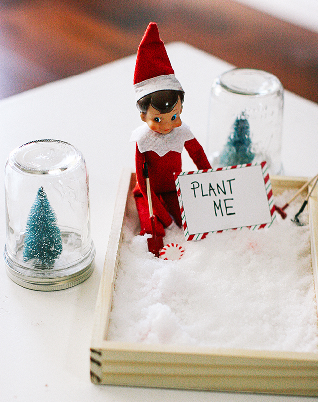 Did you know how to grow a candy cane? Elves do! This is one of our new favorite Elf on the Shelf ideas!