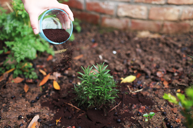 Use coffee grounds as a natural compost.