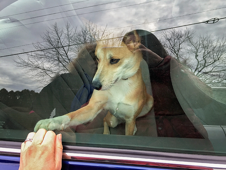 Saying goodbye | Dog in car