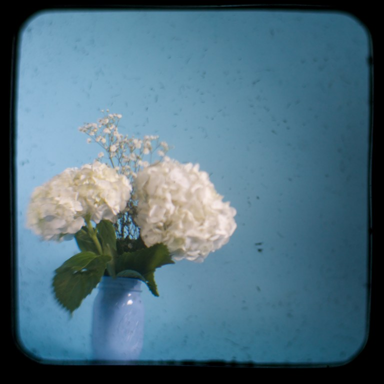 Shooting Through The Viewfinder: Flowers
