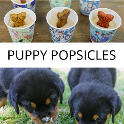 Puppy Popsicles | Frozen Dog Treats