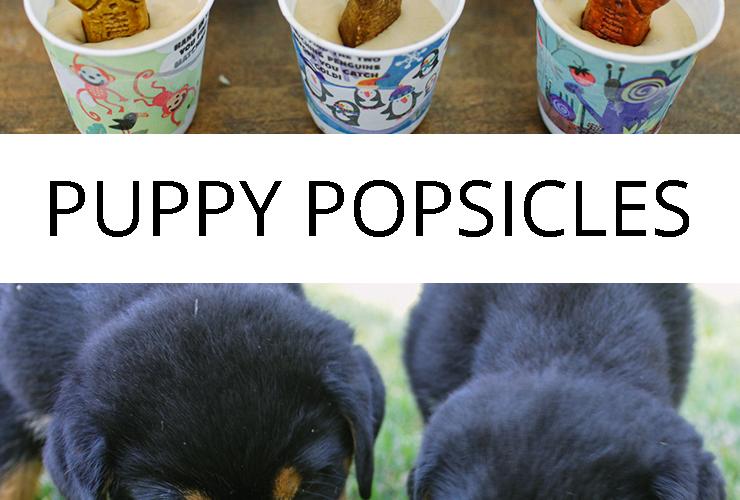 Puppy Popsicles   Frozen Dog Treats