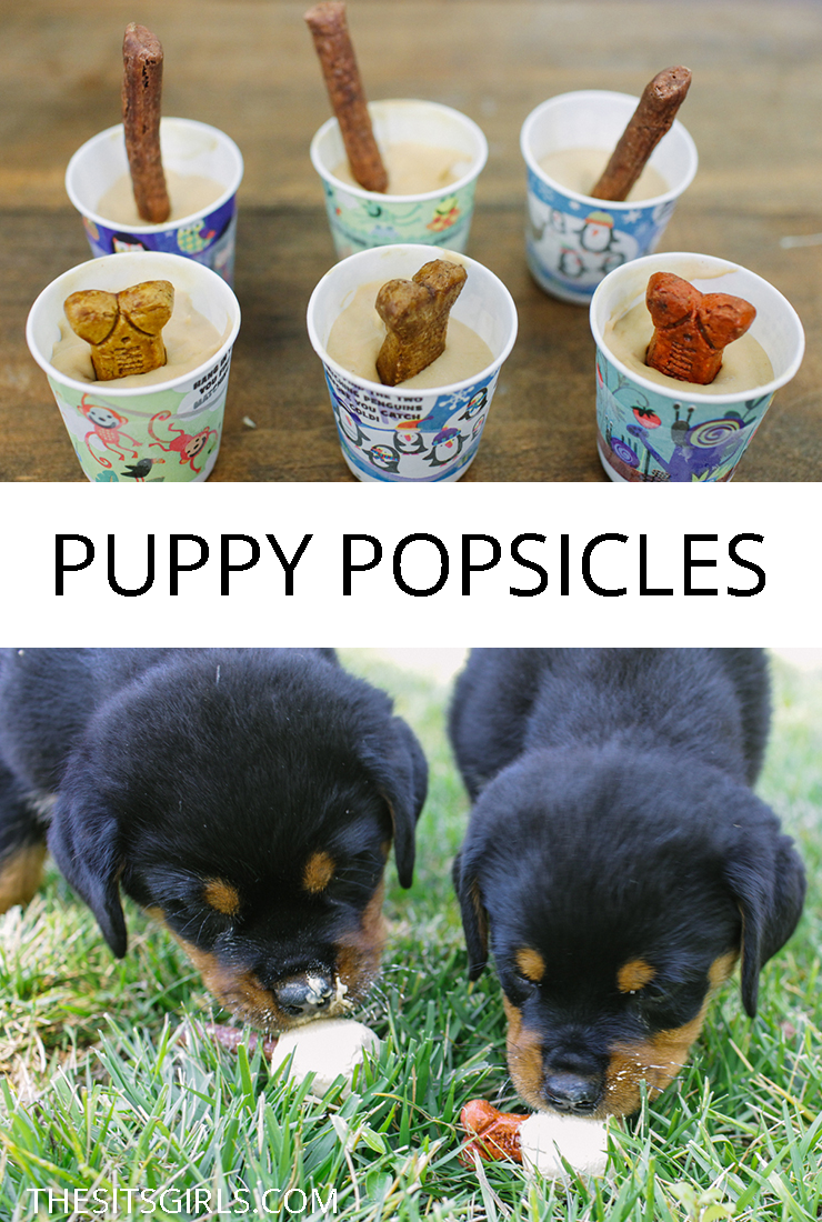 Popsicles aren't just for humans! Your puppy will love cooling down with a homemade dog treat. Make your own puppy popsicles today!