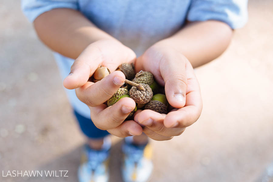 Hands Holding Acorns